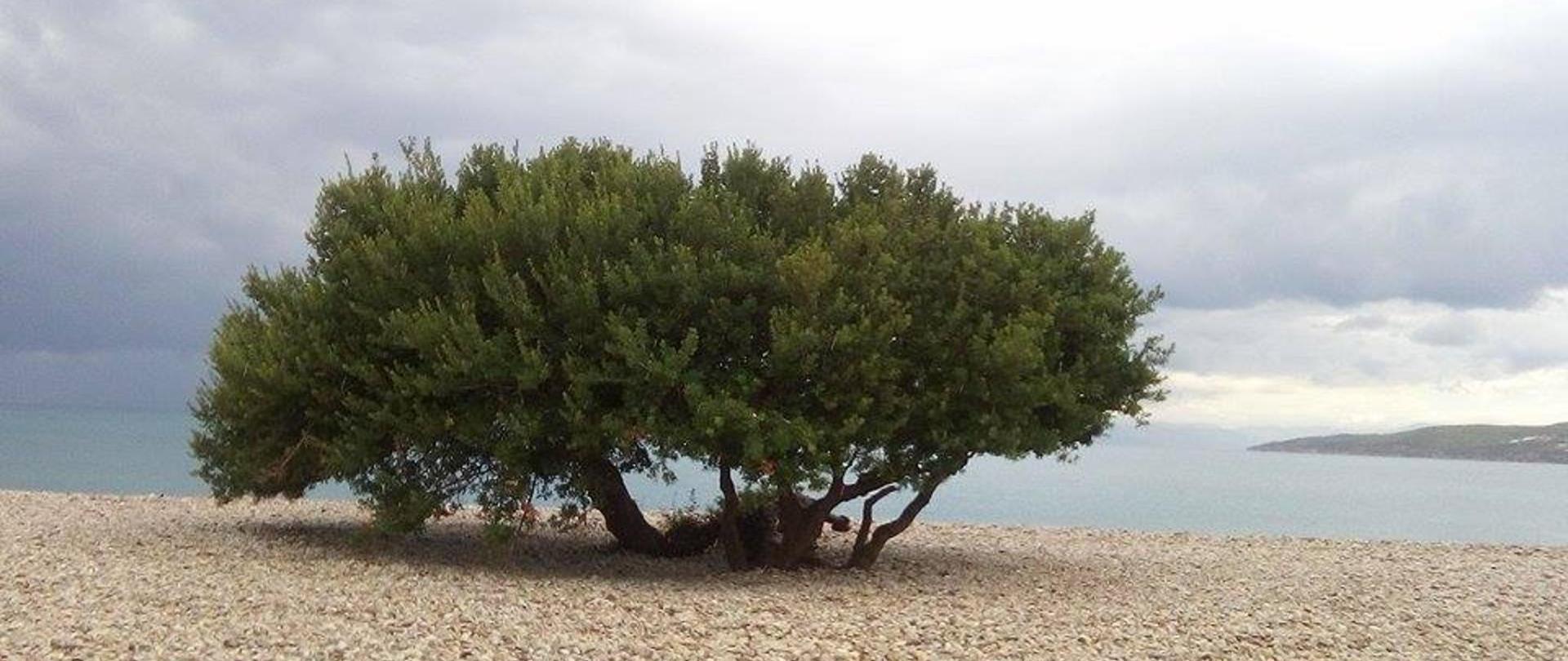 Ververouda beach