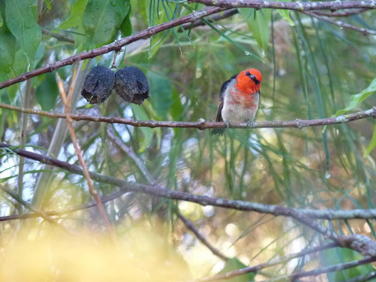 Birds on the property