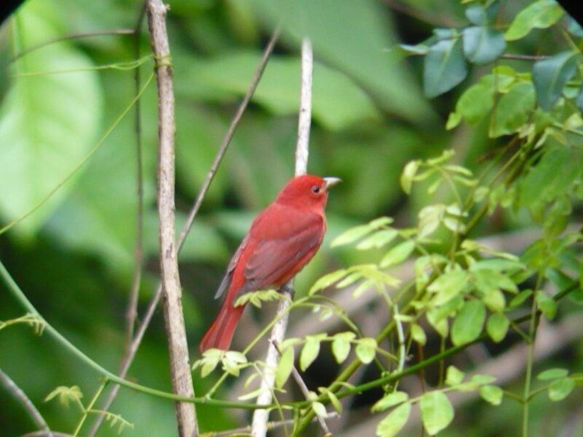 Algunas especies de aves
