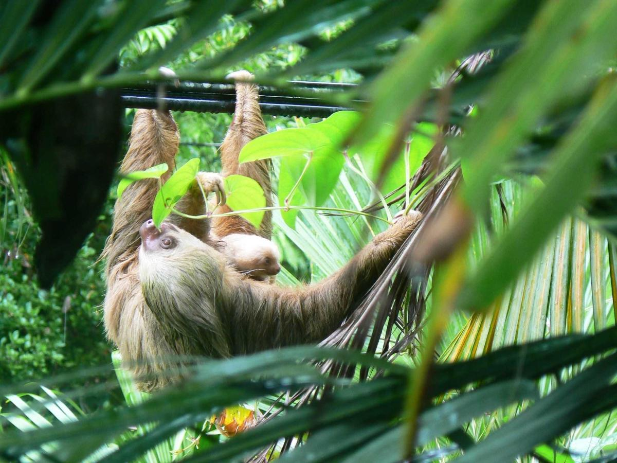 sloth-with-baby.jpg