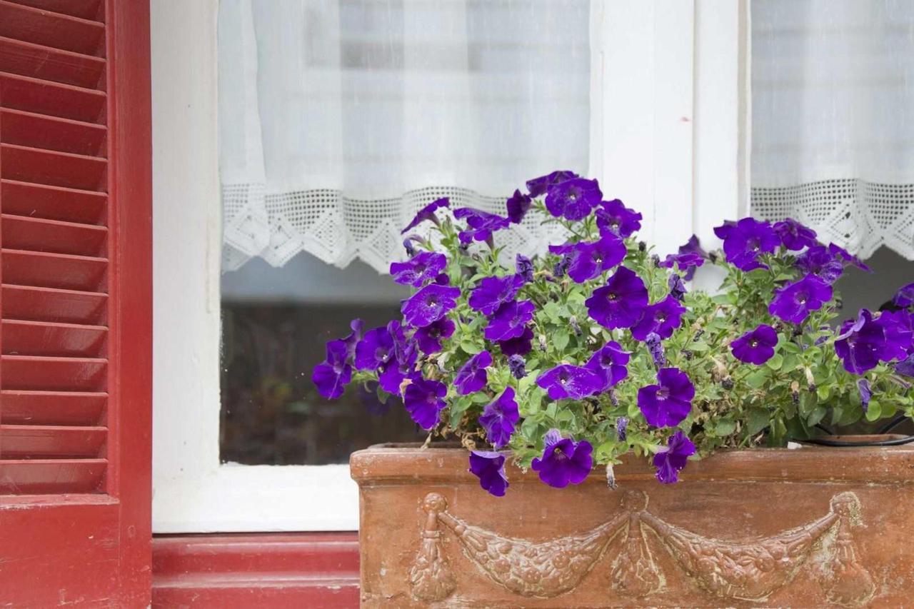Flower Pot on the Window