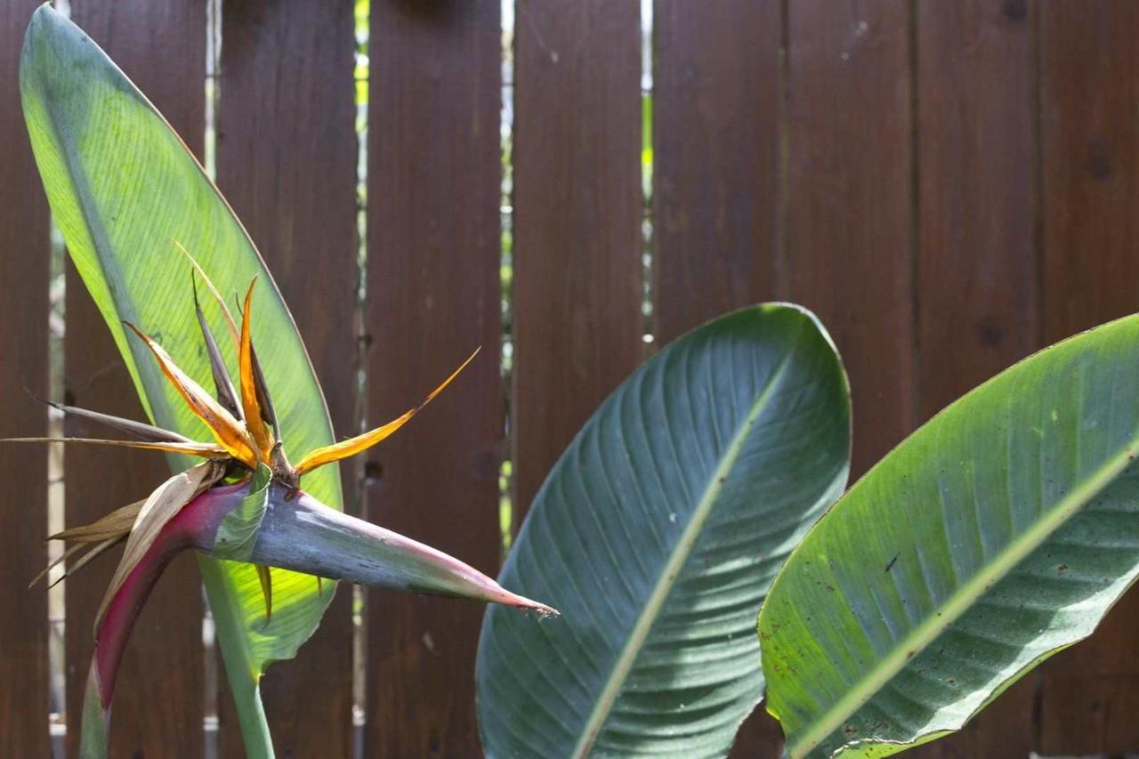Paradise Bird Flower