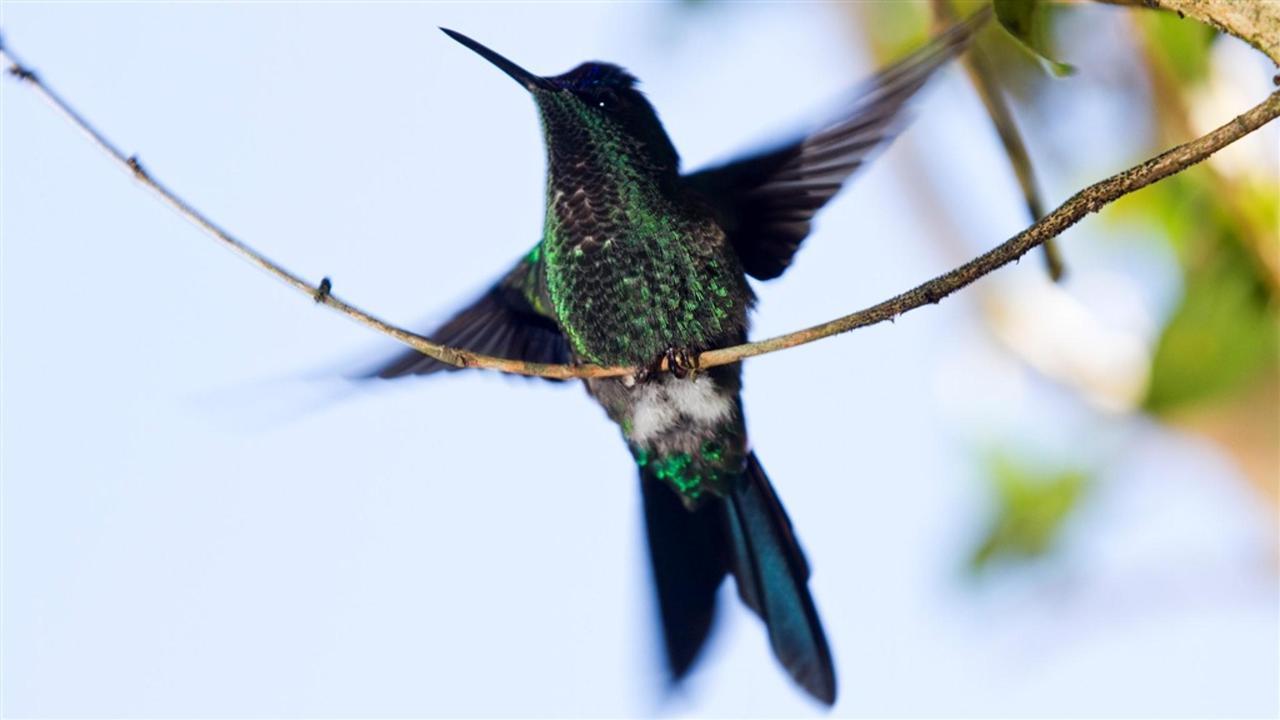 Pássaros(2).jpg