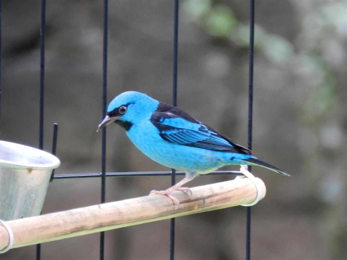 Pássaros(3).jpg