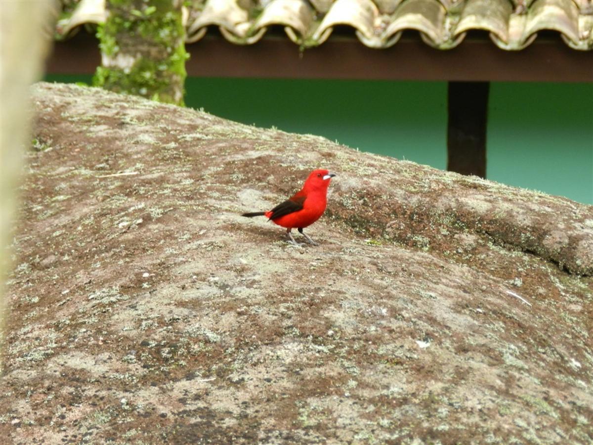 Pássaros(7).jpg
