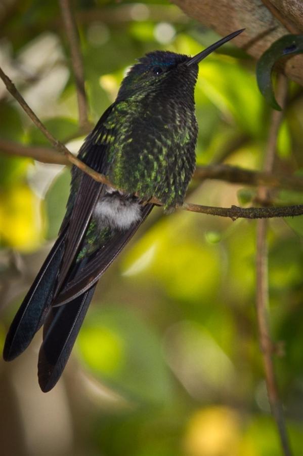 Pássaros(15).jpg