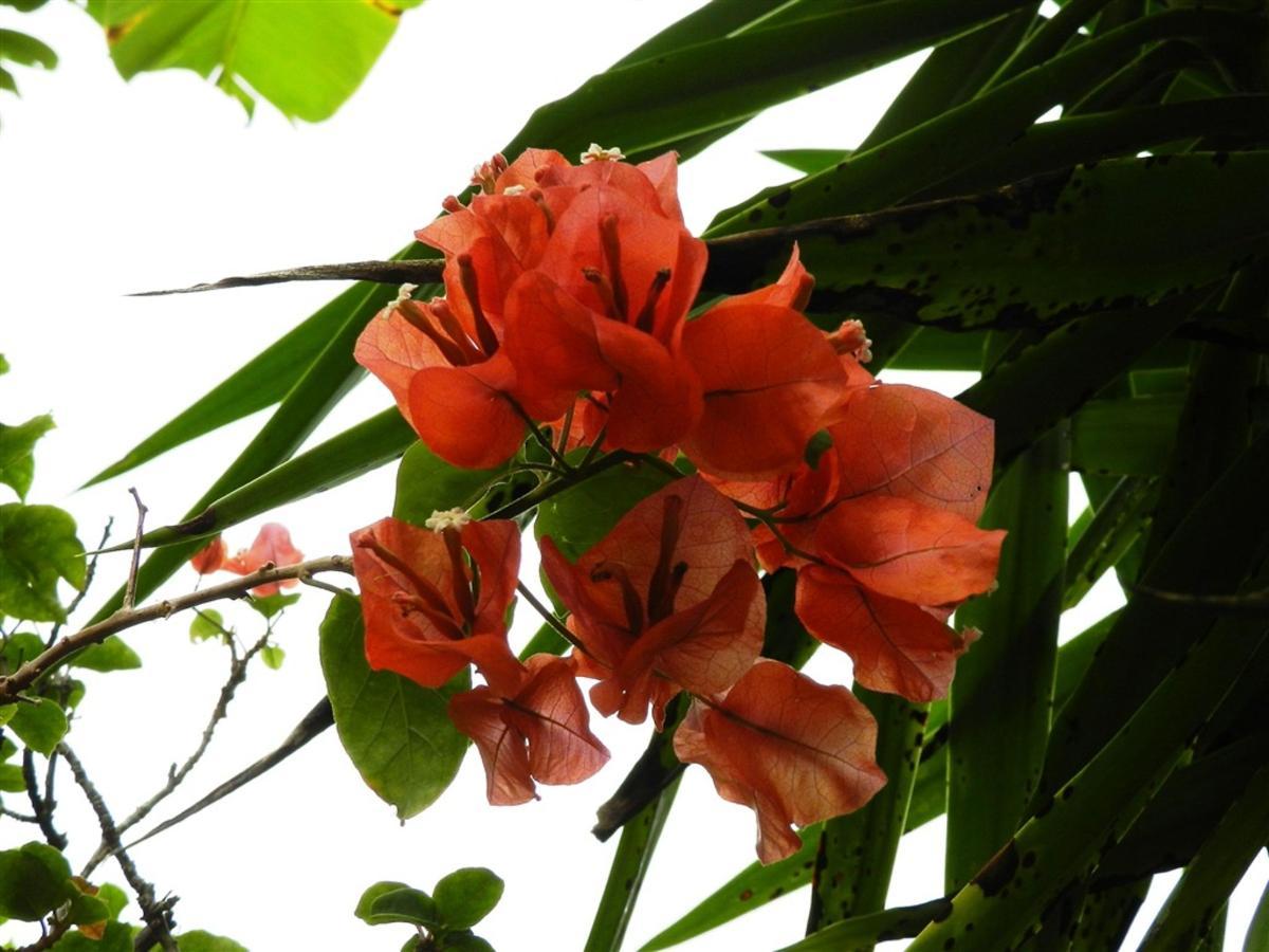 Flores e Frutas Pousada Vila das Pedras (3).jpg