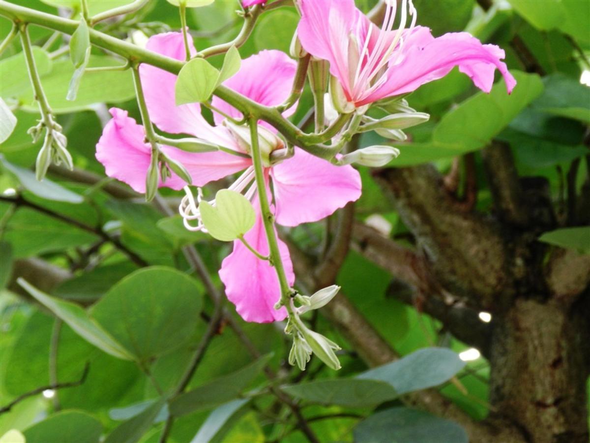 Flores e Frutas Pousada Vila das Pedras (2).jpg