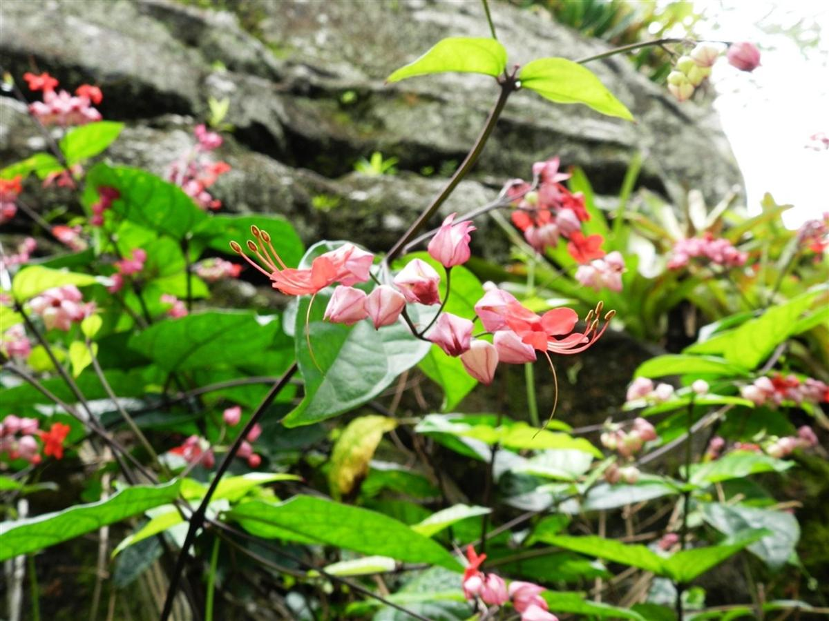 Flores e Frutas Pousada Vila das Pedras (5).jpg