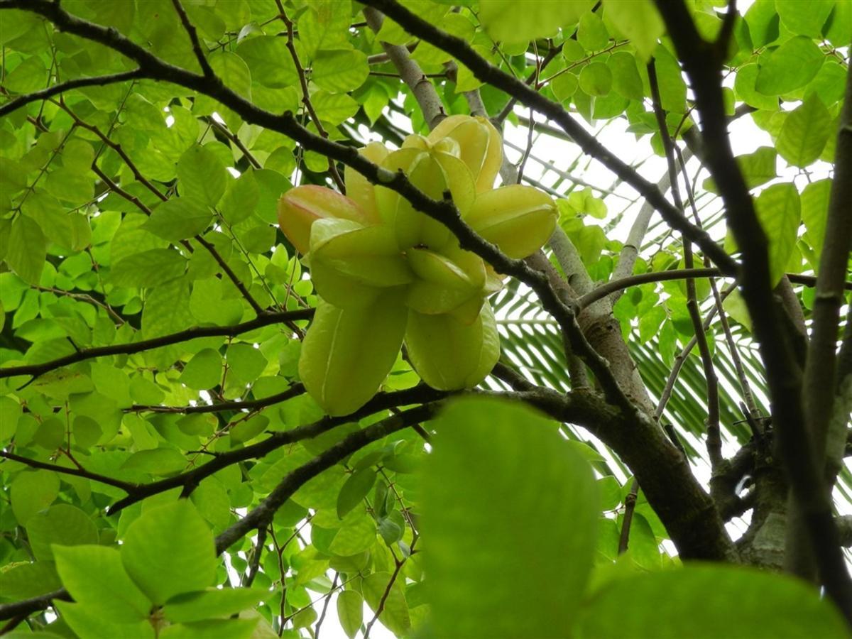 Flores e Frutas Pousada Vila das Pedras (10).jpg