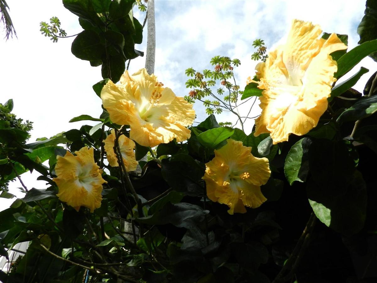Flores e Frutas Pousada Vila das Pedras (15).jpg