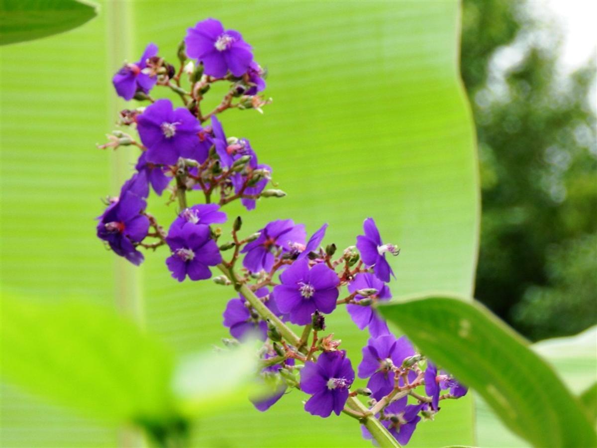 Flores e Frutas Pousada Vila das Pedras (20).jpg