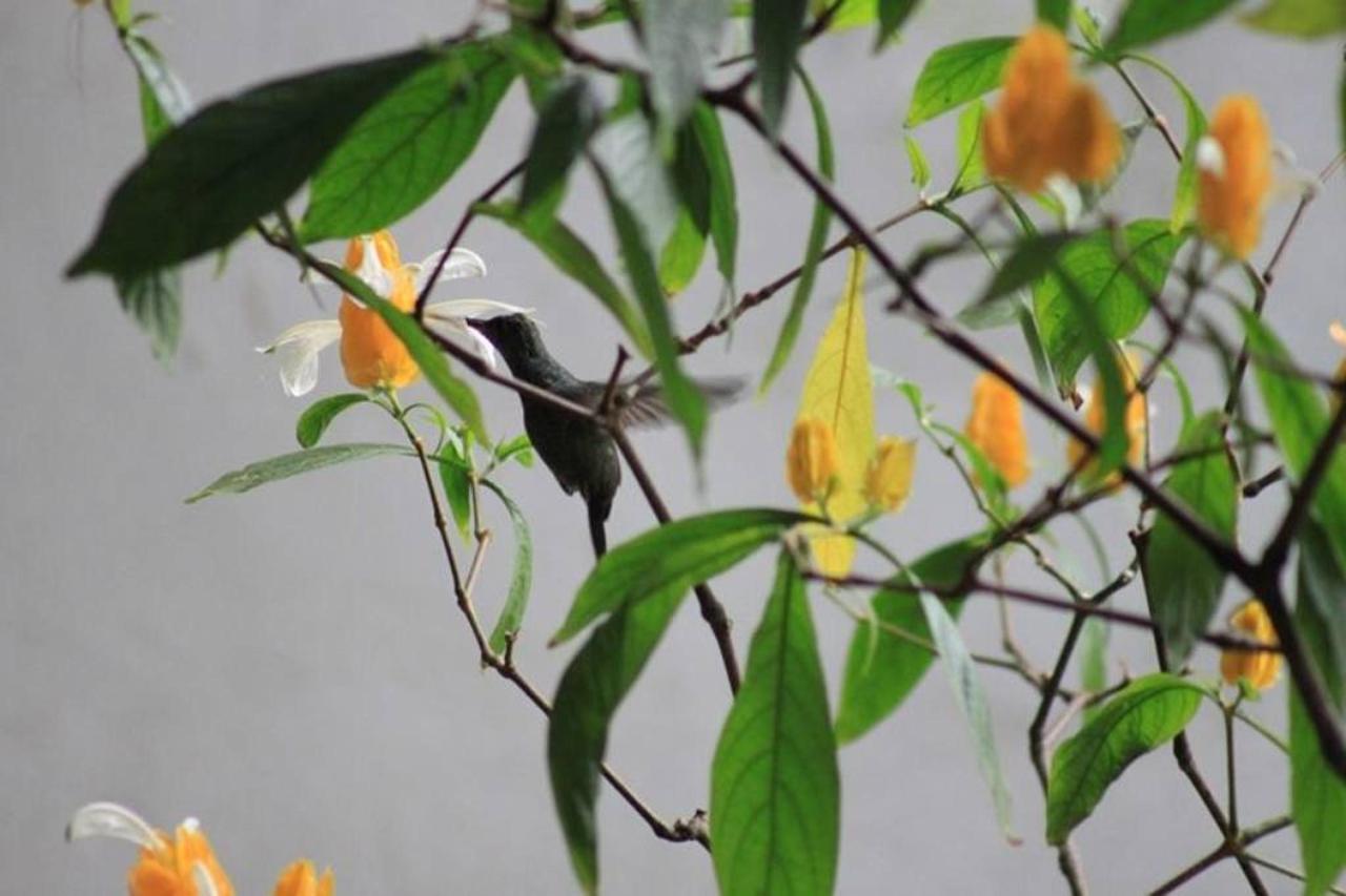 Flora y Fauna-Fundo-San-Jose-Junin-Peru-01.JPG