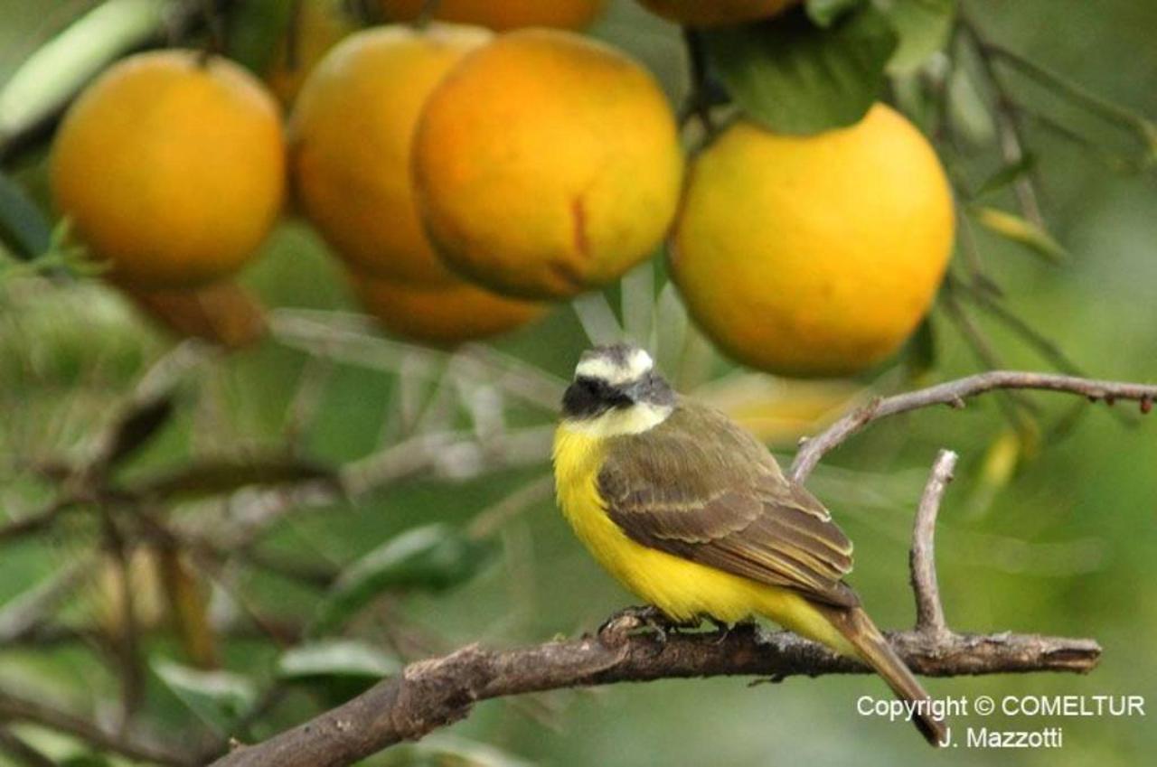 Flora y Fauna-Fundo-San-Jose-Junin-Peru-14.jpg