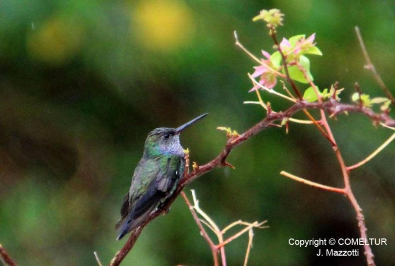 Flora y Fauna-Fundo-San-Jose-Junin-Peru-17.jpg