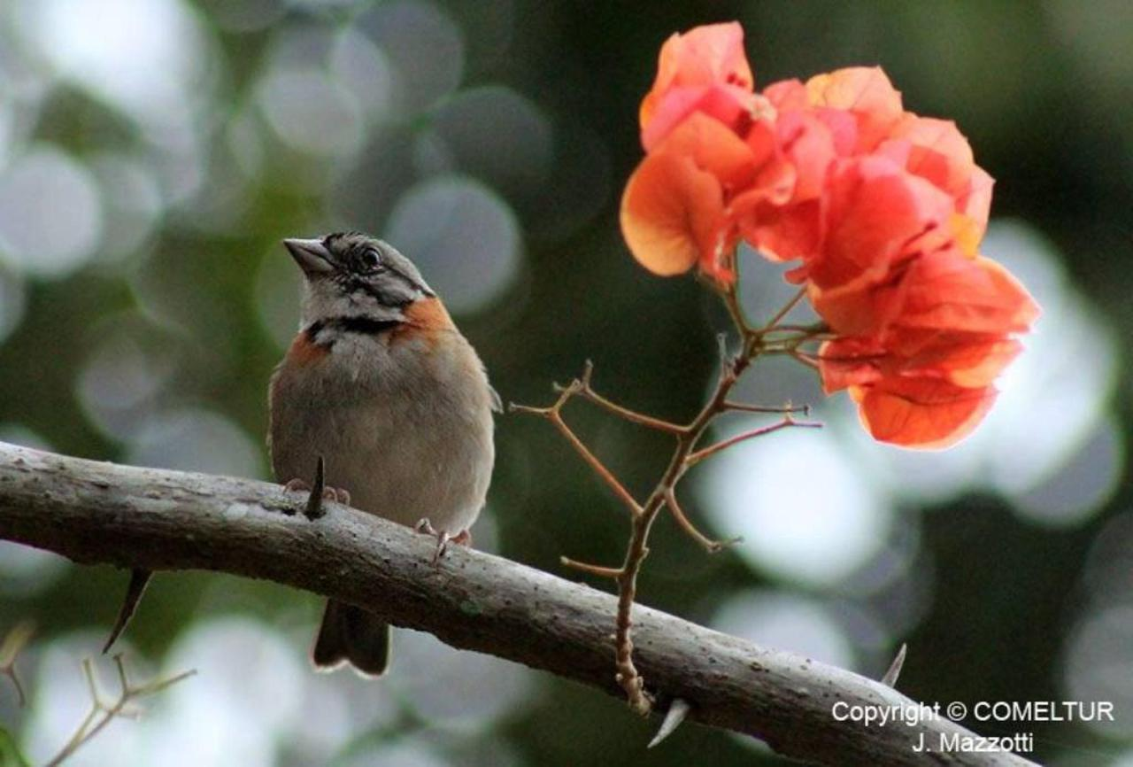 Flora y Fauna-Fundo-San-Jose-Junin-Peru-21.jpg