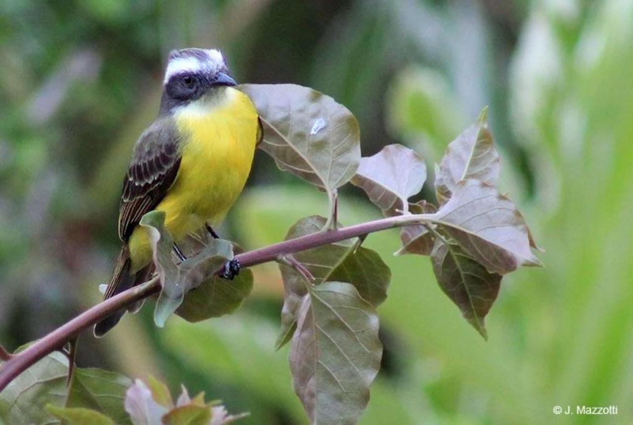 Flora y Fauna-Fundo-San-Jose-Junin-Peru-31.jpg