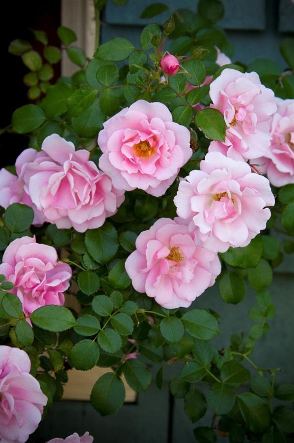 Seasonal Blooms