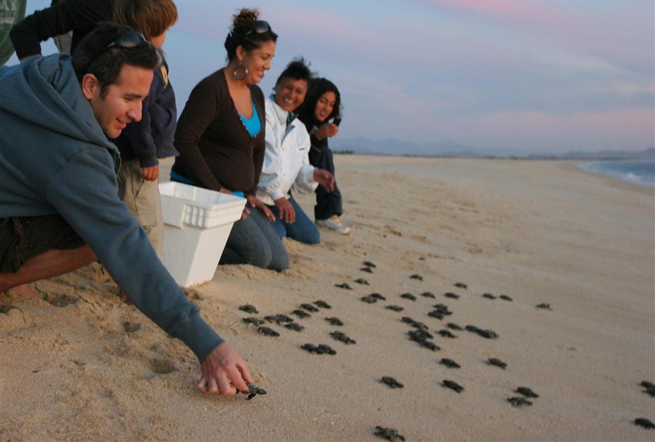 Releasing baby sea turtles.jpg