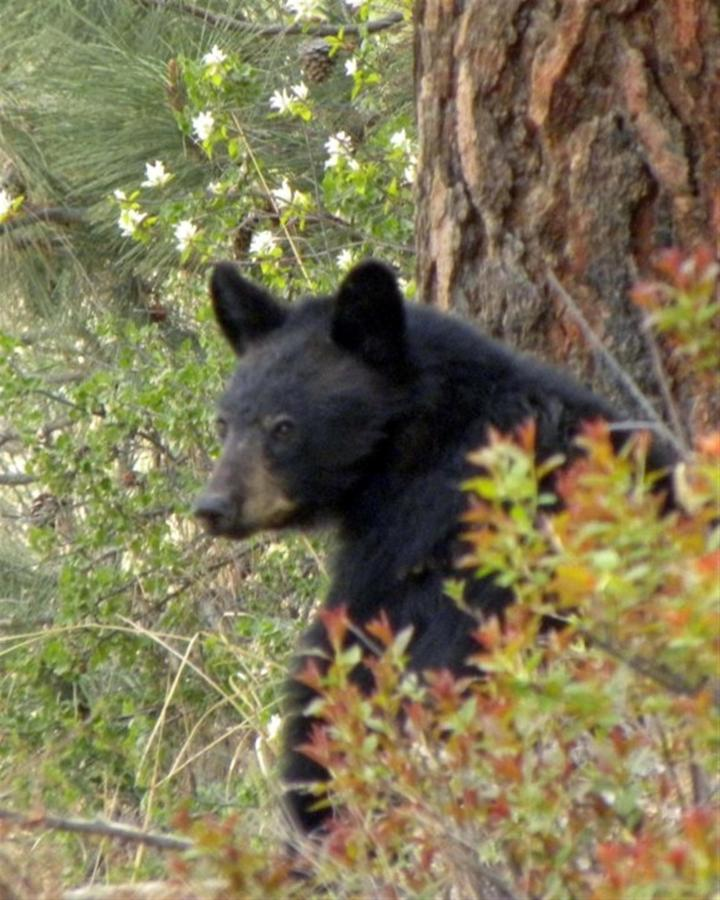We have a healthy population of black and brown bear - so we always say be bear aware when hiking.jpg