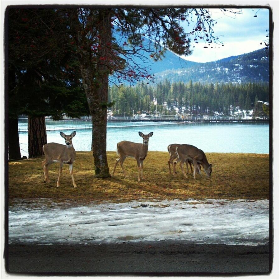 We have a large herd of whitetail deer that can be seen year round in town.jpg