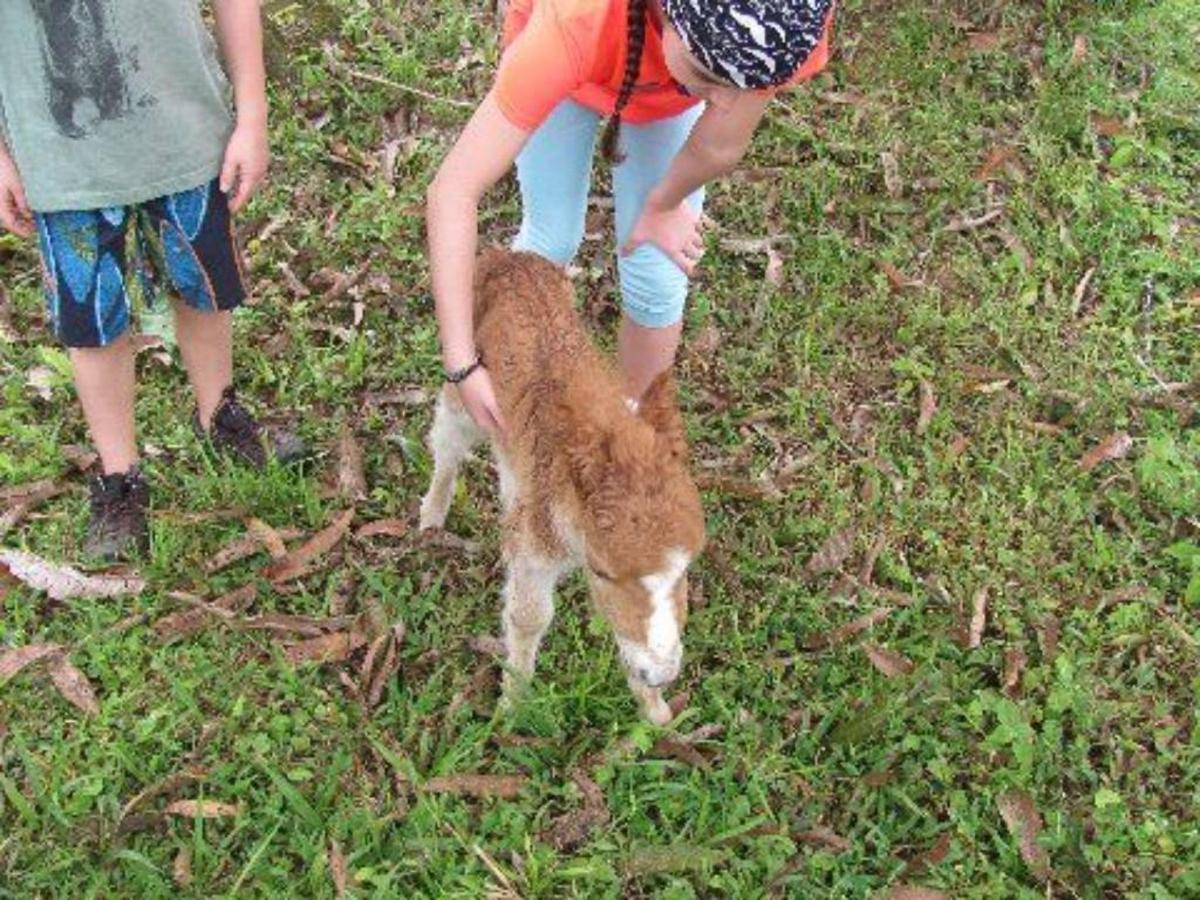 Miniature Horse & Donkeys