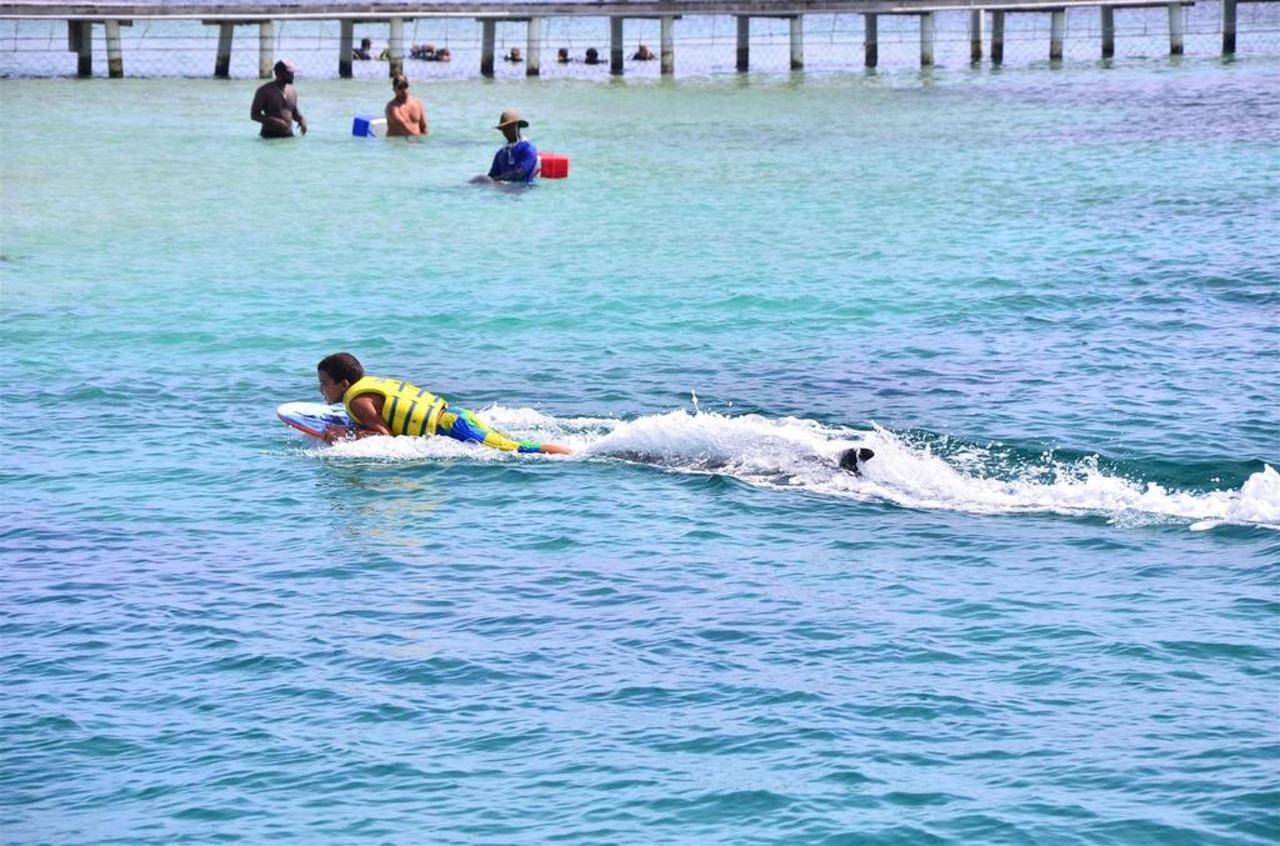Dolphin Scuba Camp