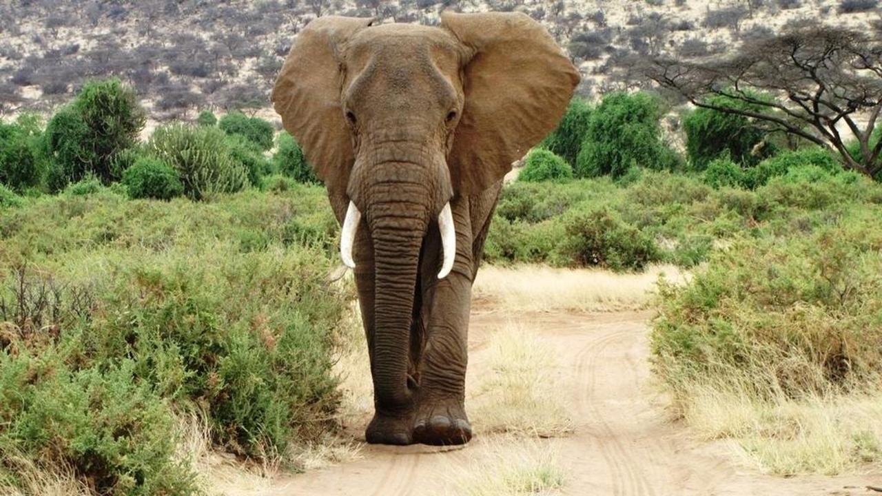 Incredible wildlife encounters on safari with Saruni.jpg