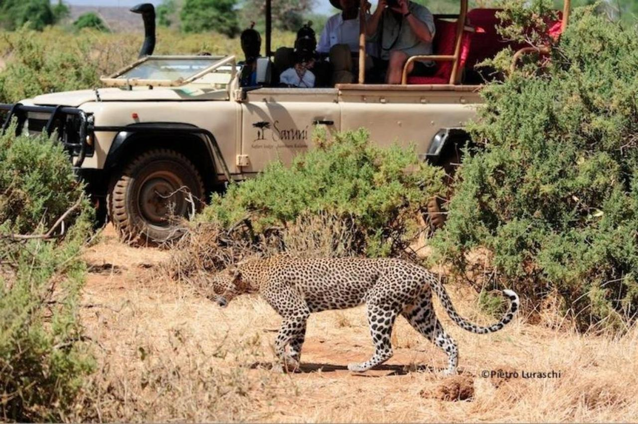 Leopard on a game drive.jpg