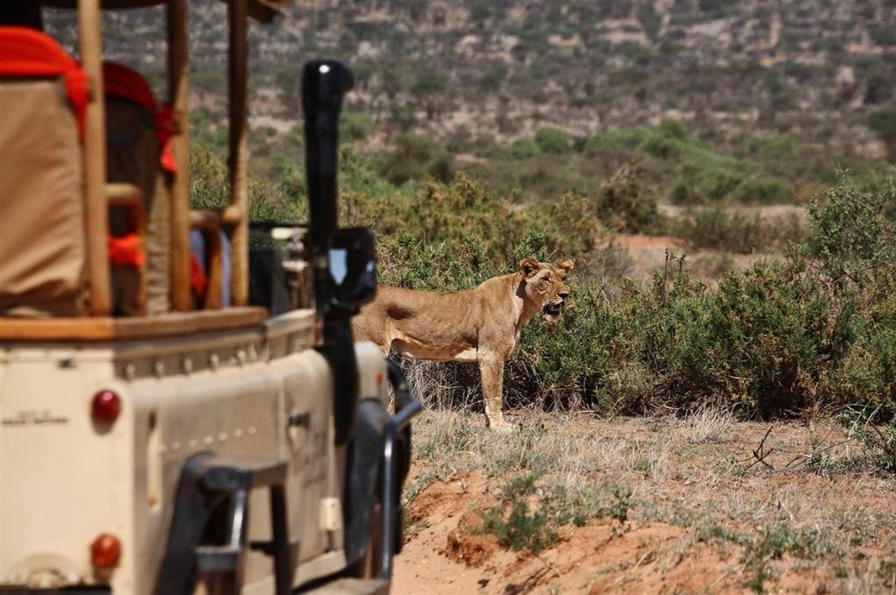 Lion on a game drive.jpg
