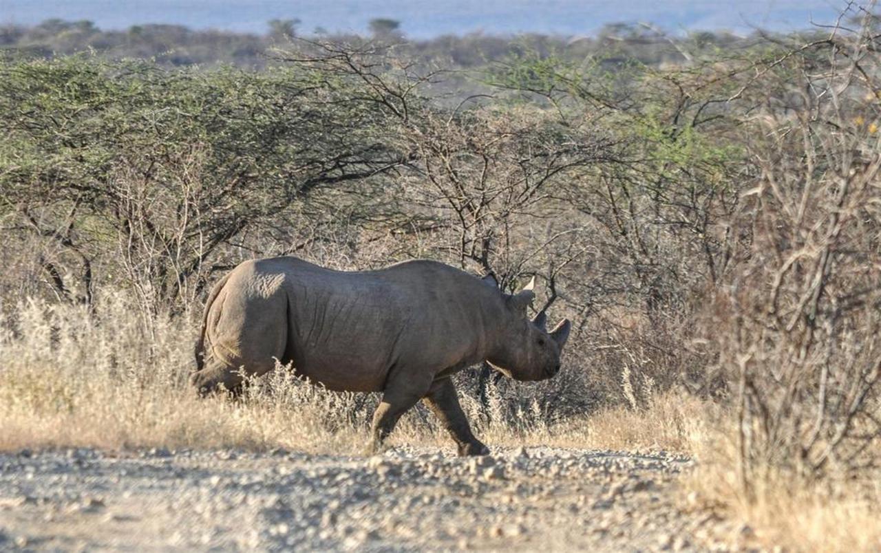 Endangered black rhino metres away.jpg