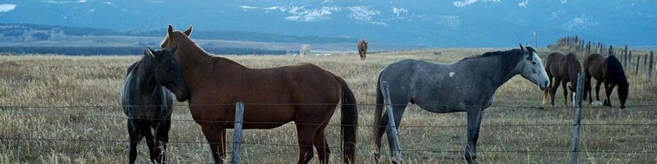 banner-photo-horses2.jpg.1920x0.jpg