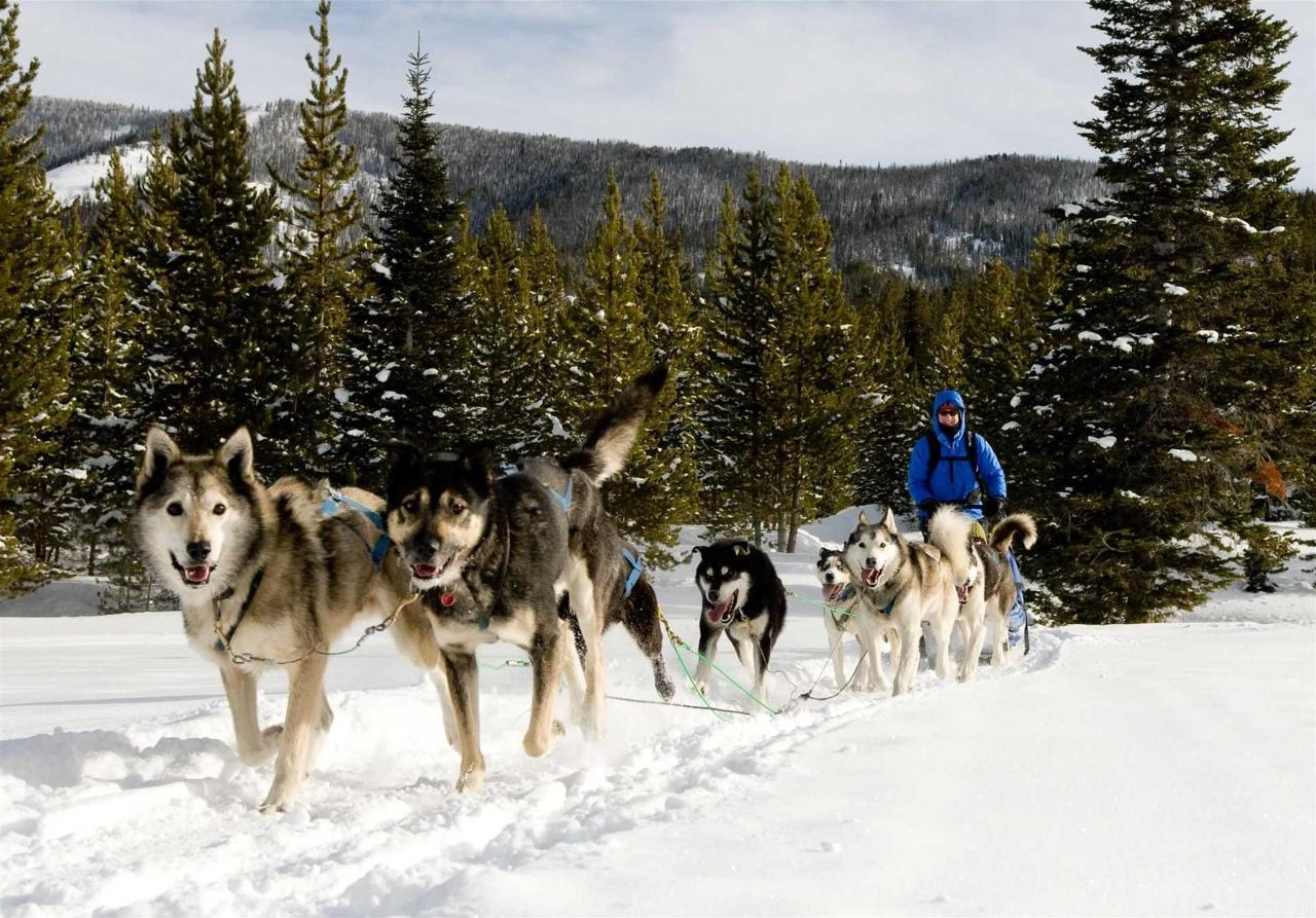 dog-sledding-fpo.jpg.1920x0.jpg