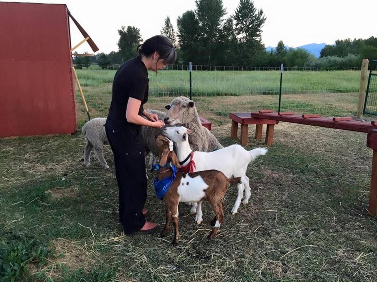goats.jpg.1024x0.jpg