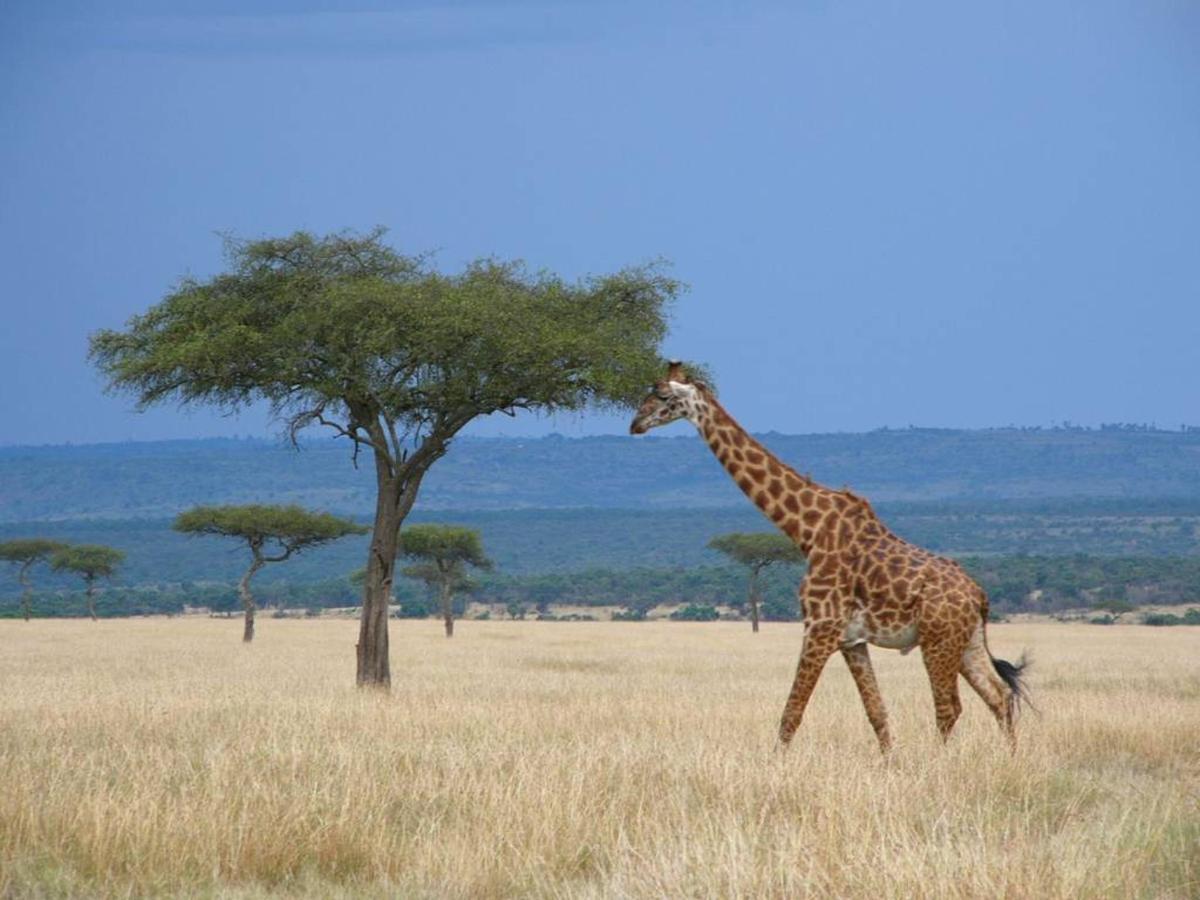 Giraffe on horizon.jpg