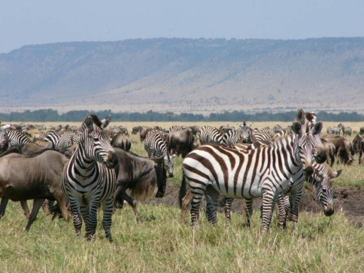 Gnu and zebra.jpg