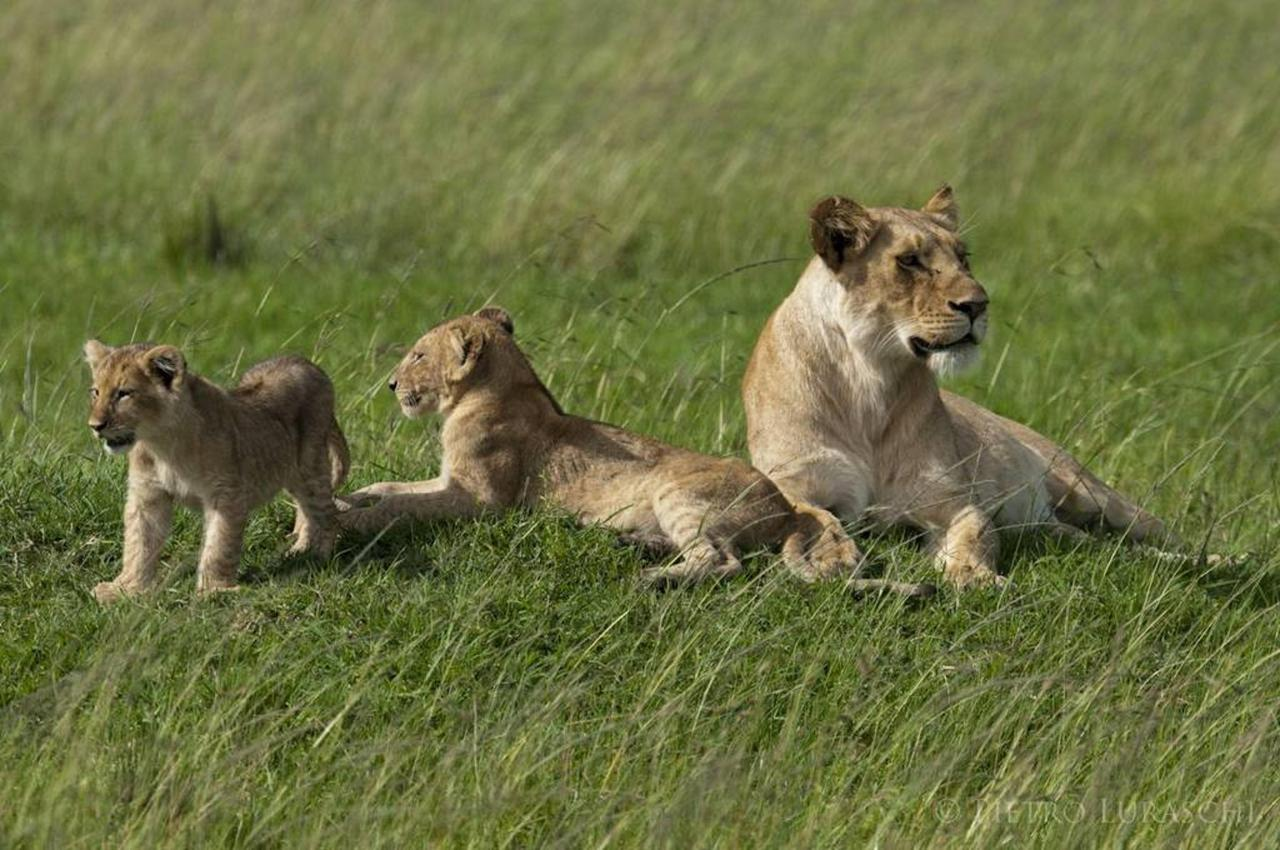 Mother and cubs.jpg