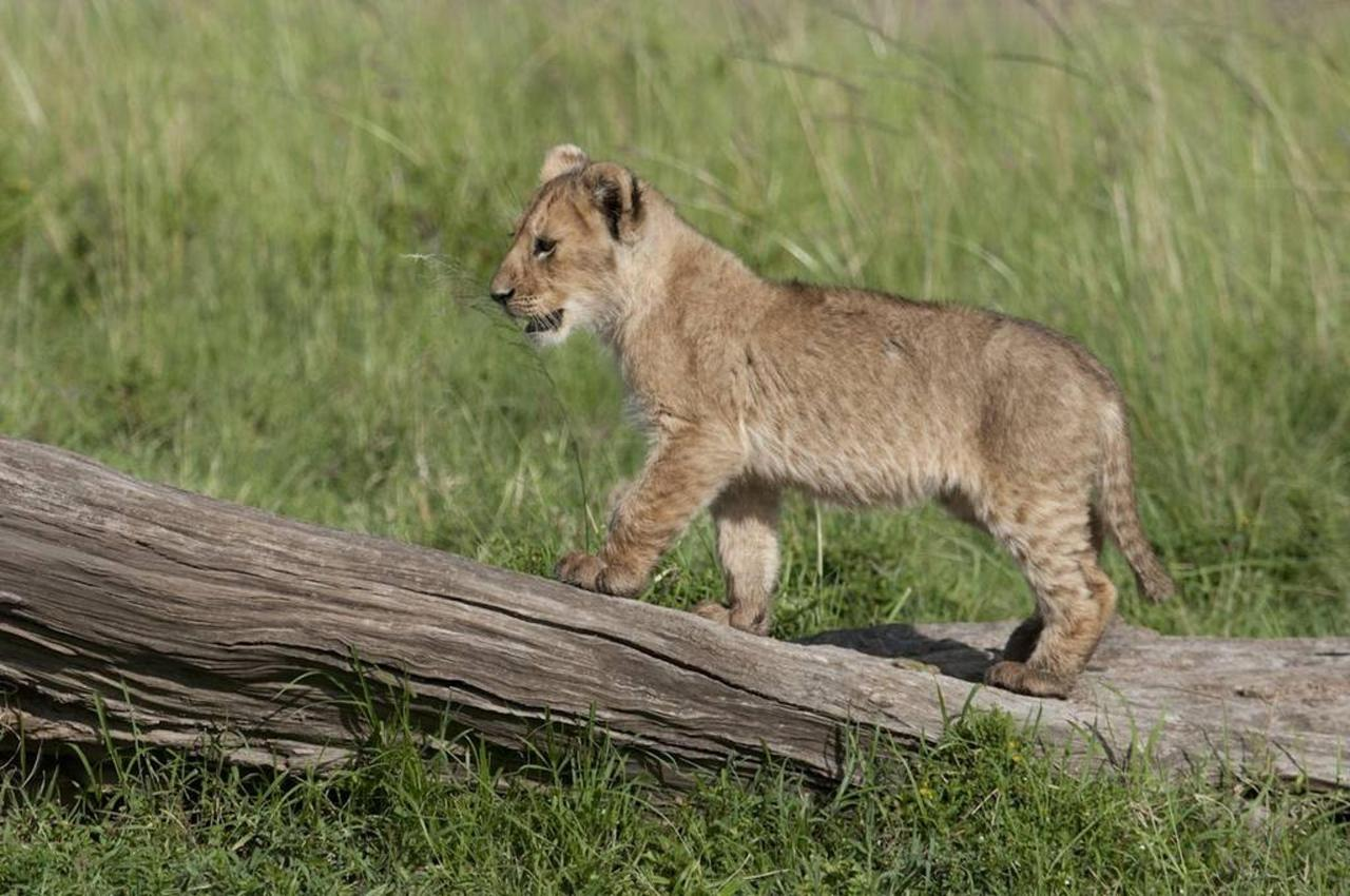 Curious cub.jpg