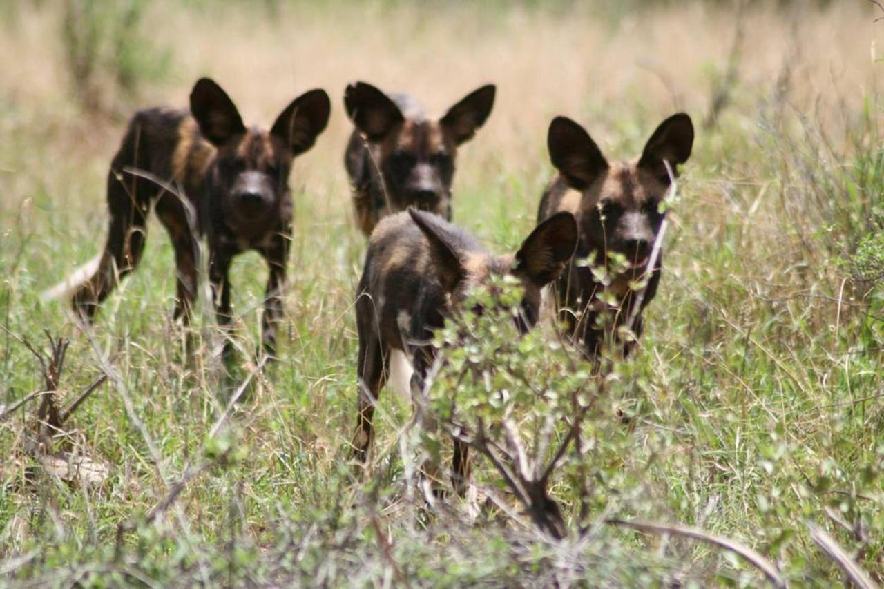 Gathering of wild dogs.jpg