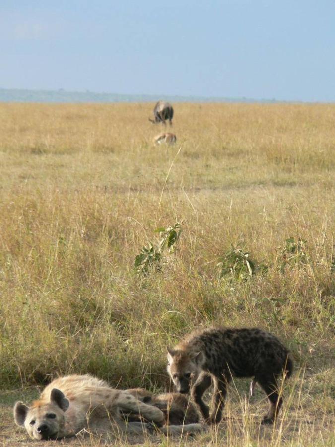 Basking hyenas.jpg