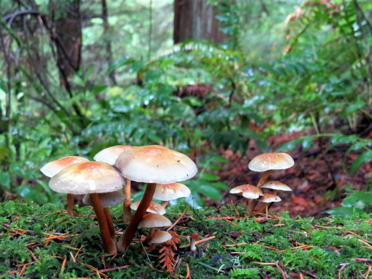 forestbathing3.jpg