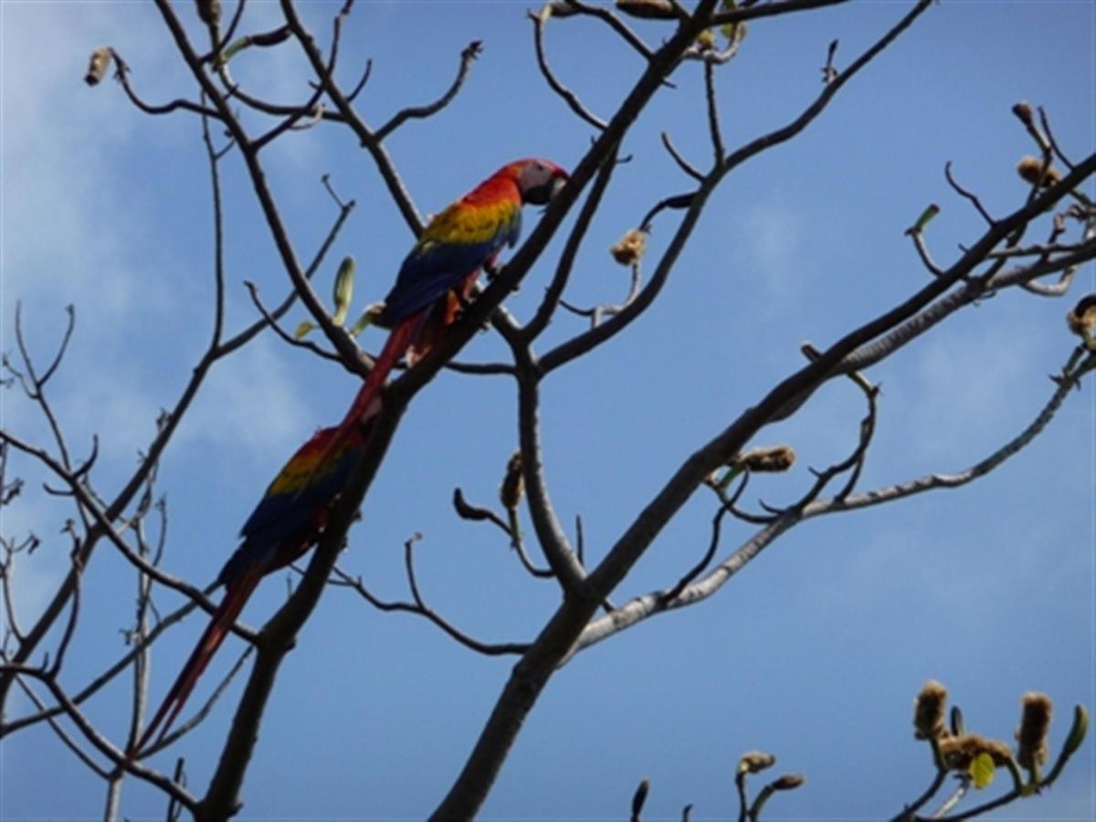 scarlet-macaw-sm.jpg.1024x0.jpg