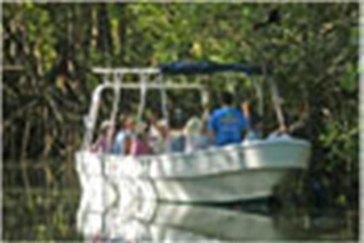 mangrove-boat-tour.jpg.1024x0.jpg