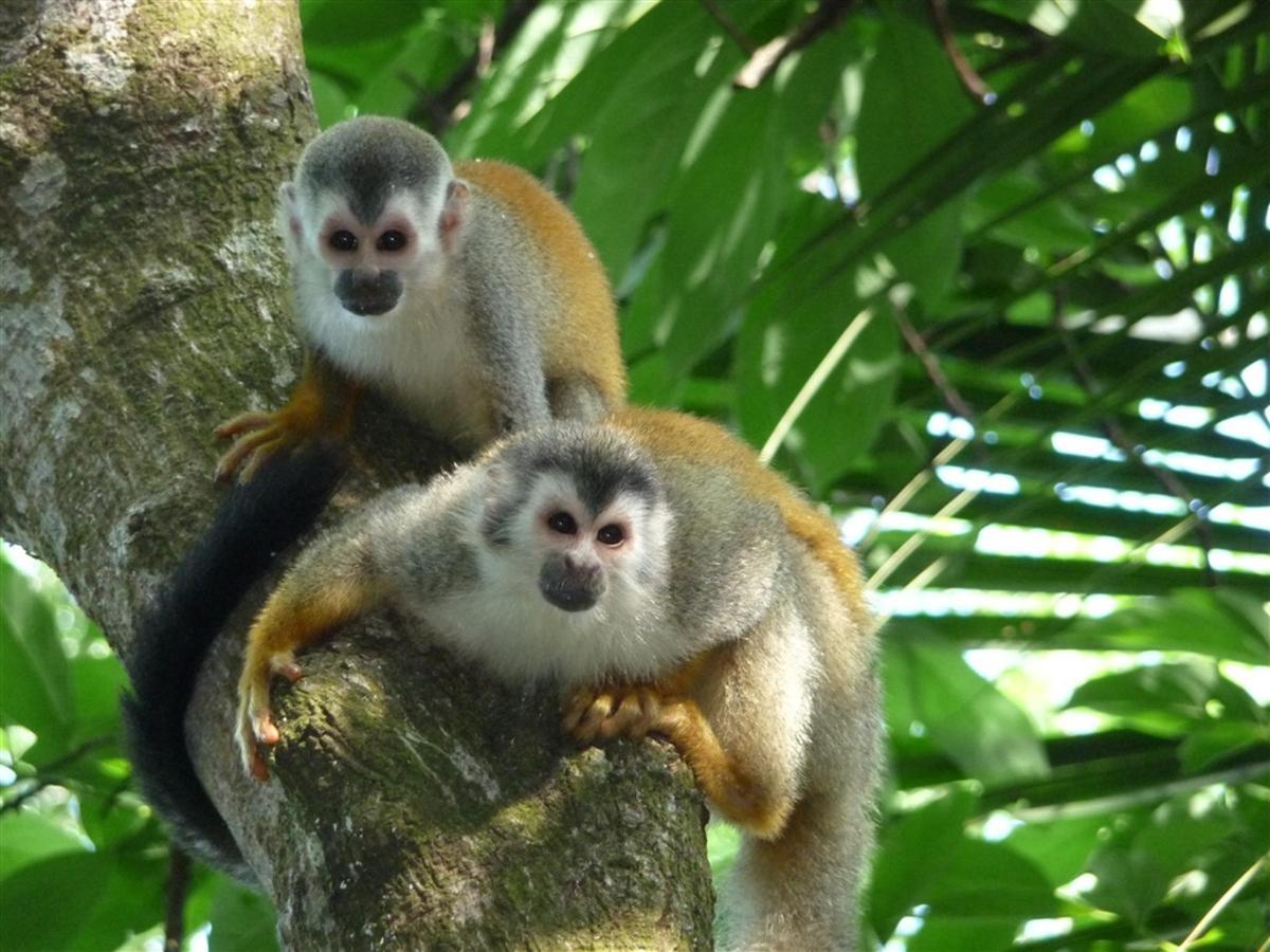 squirrel-monkeys-180-dpi.jpg.1024x0.jpg