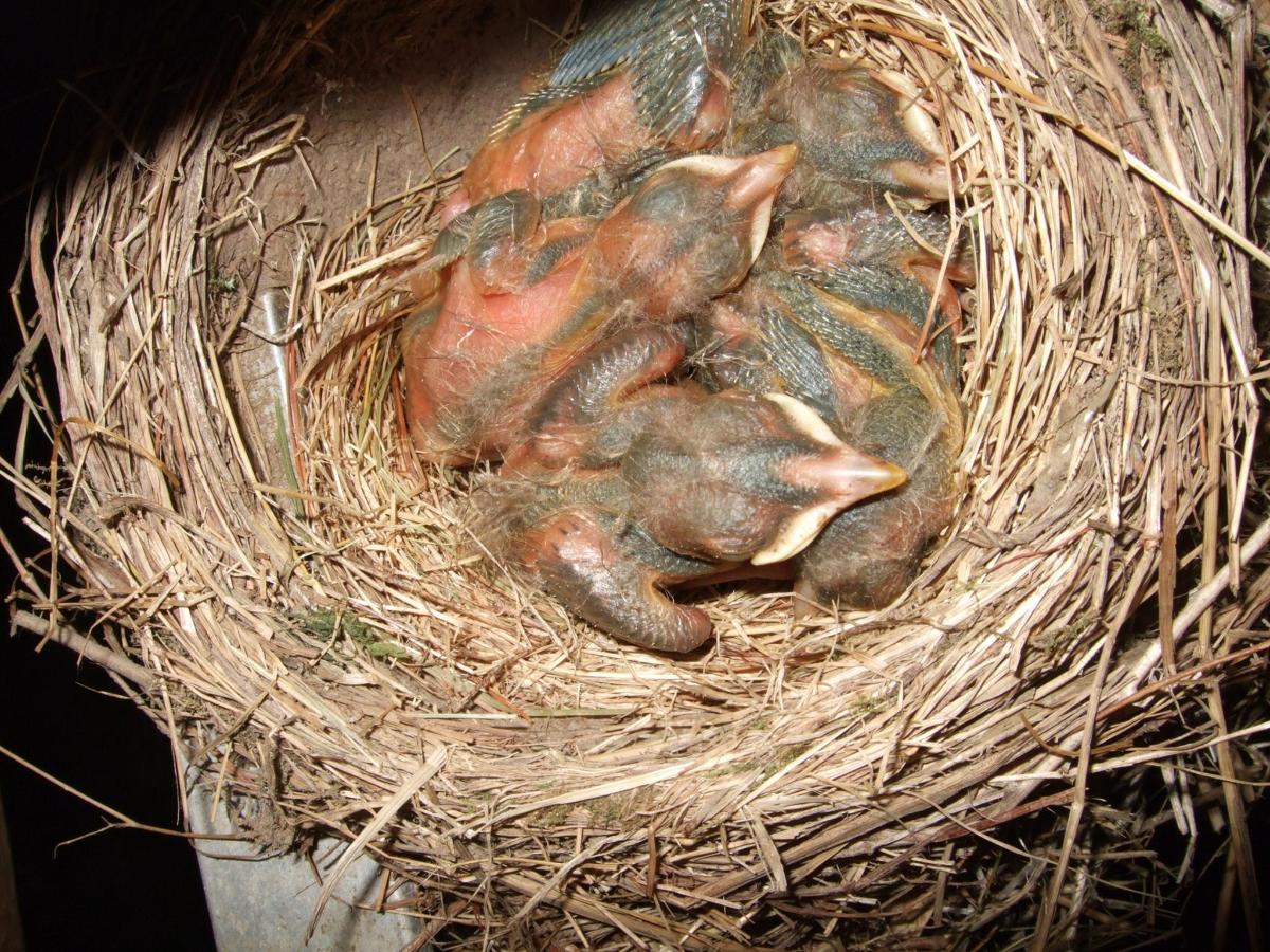 newly-hatched-baby-birds.jpg.1920x0.jpg