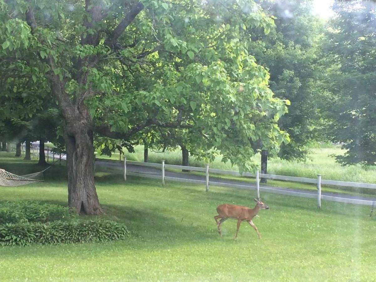 deer-in-front-yard.jpg.1920x0 (1).jpg