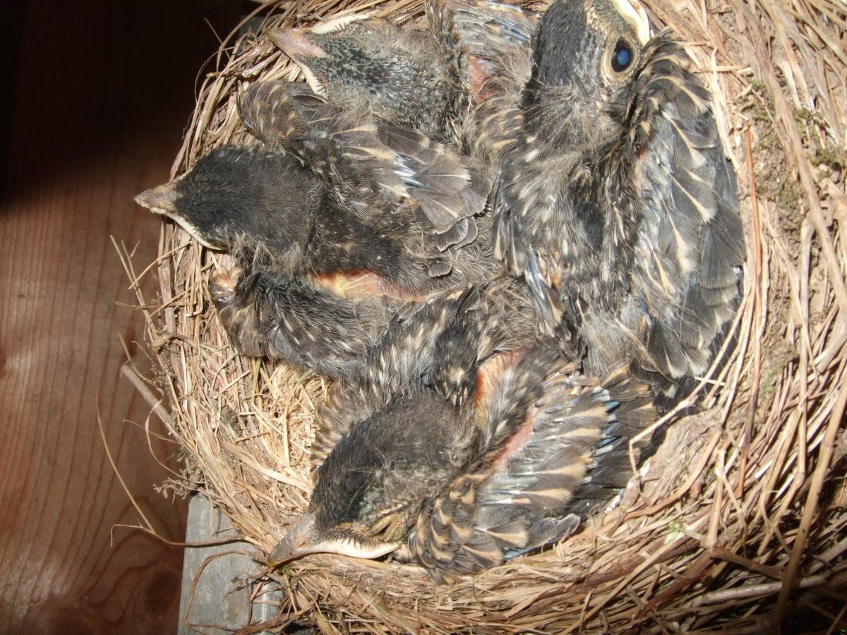 baby-birds-will-fly-off-soon.jpg.1920x0.jpg