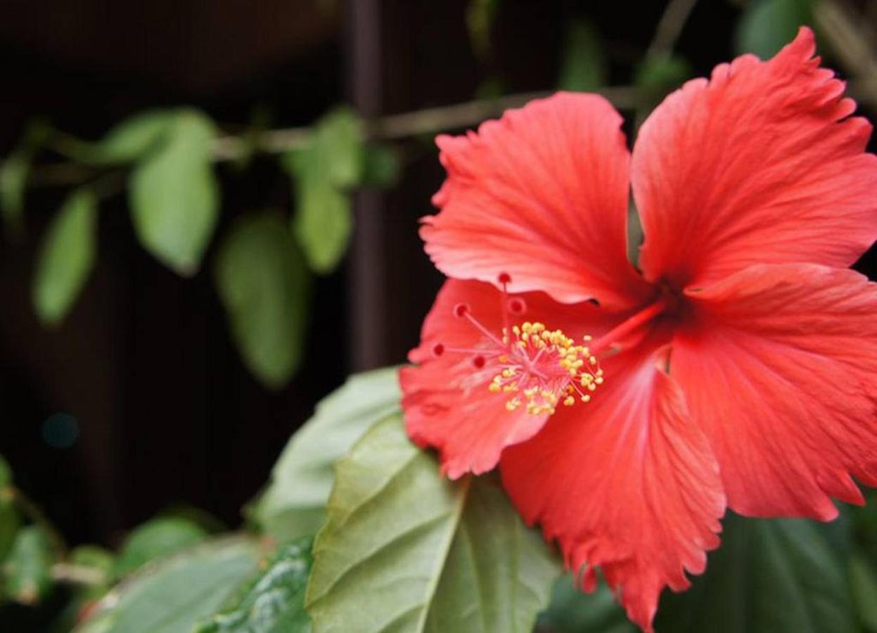flower.jpg.1024x0.jpg