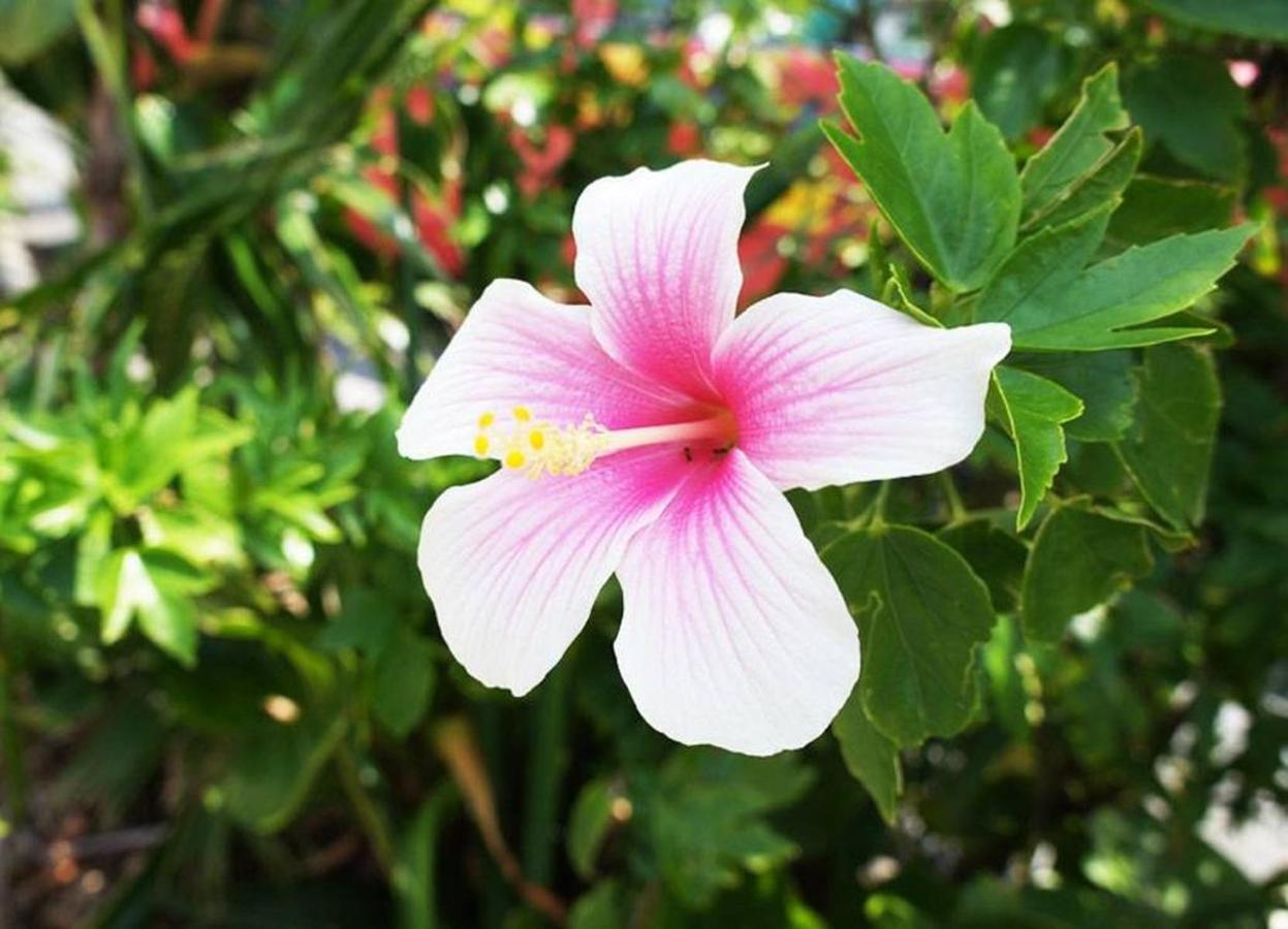 花hibiscus.jpg.1024x0.jpg