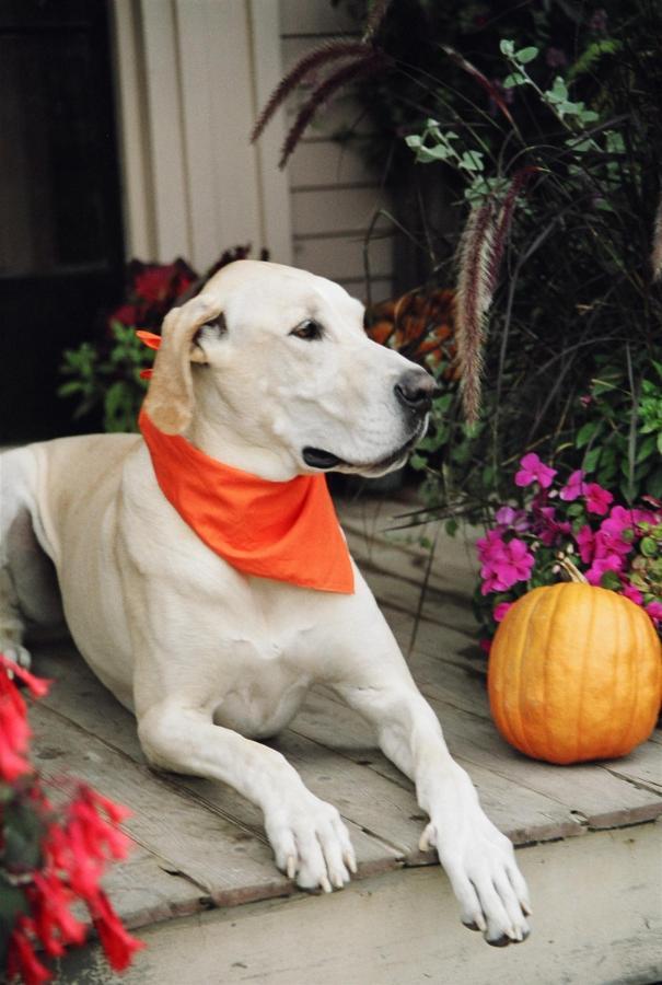 dog-on-porch-2.jpg.1920x0.jpg